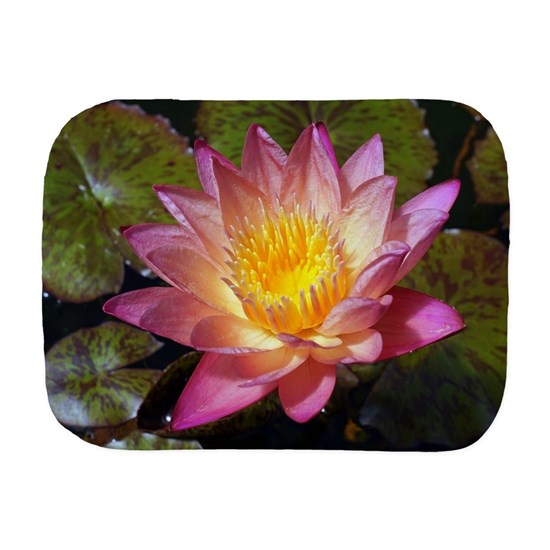 Lovely Pink Water Lily Photograph