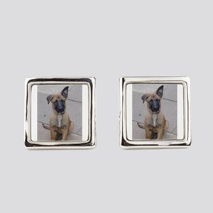 belgian malinois puppy Square Cufflinks