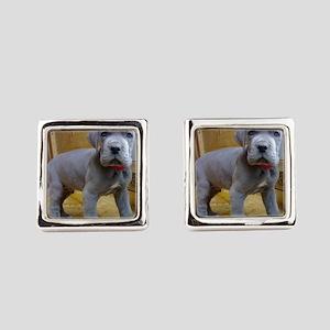 great dane blue puppy ls Square Cufflinks