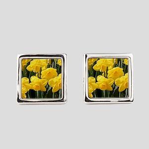 Daffodil flowers in bloom in gard Square Cufflinks