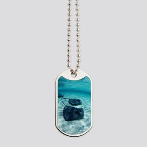 Southern stingrays Dog Tags