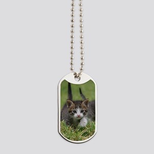 Cat_2015_0102 Dog Tags