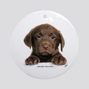 Chocolate Labrador Retriever puppy 9Y270D-050 Orna
