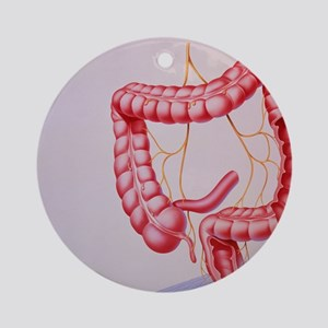 Large intestine Round Ornament