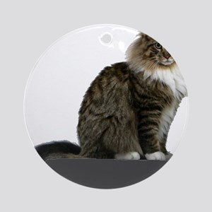 maine coon sitting tabby white Round Ornament