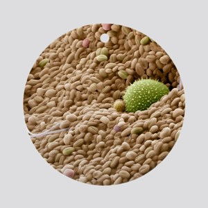 Bee pollen basket, SEM Round Ornament