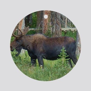 Wildlife, Bull Moose, Photography,  Round Ornament