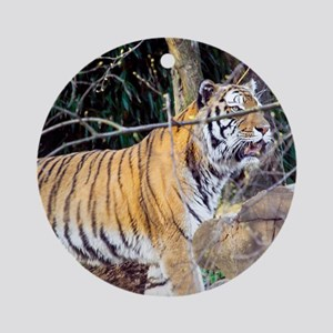 Tiger in the woods Ornament (Round)