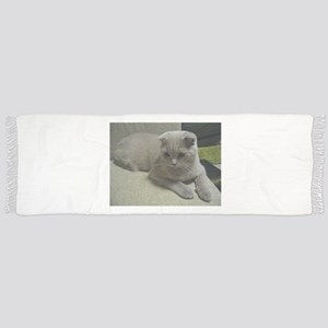 laying 2 scottish fold Scarf