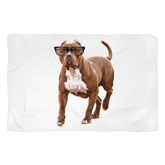 Funny pit bull in glasses