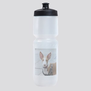 ibizan hound Sports Bottle