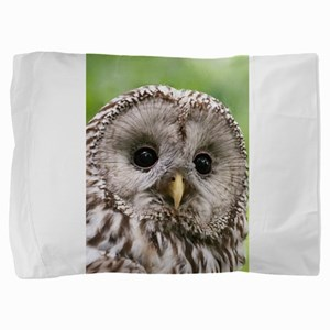 Owl See You Pillow Sham