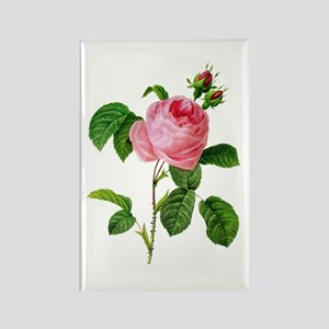 Pierre-Joseph Redoute Rose Rectangle Magnet
