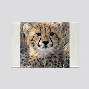 Cheetah Cub Rectangle Magnet