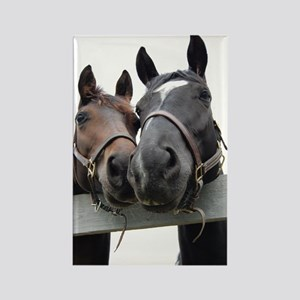 Kissing Horses Rectangle Magnet