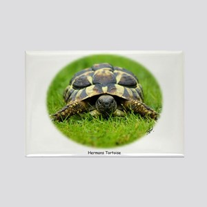 Hermann's Tortoise 9W027D-048 Rectangle Magnet