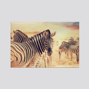 Beautiful Zebras Magnets