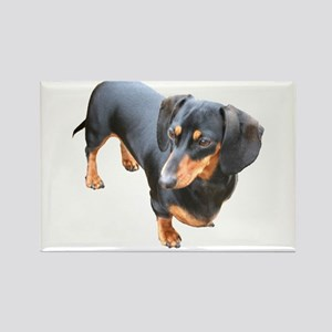 'Lily Dachshund Dog' Rectangle Magnet