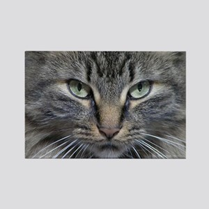 Main Coon Kitty Cat Rectangle Magnet