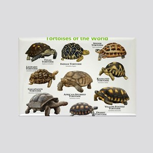 Tortoises of the World Rectangle Magnet