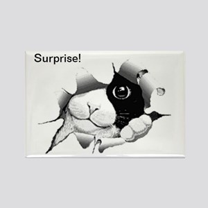 Curious Black And White Cat Birthday Magnets