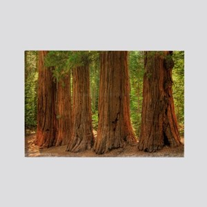 SEQUOIA Rectangle Magnet