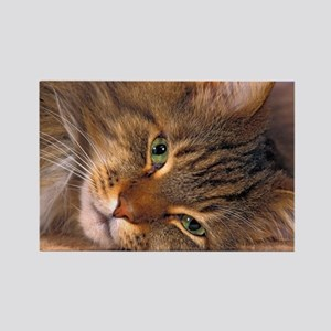 Maine Coon Cat Rectangle Magnet