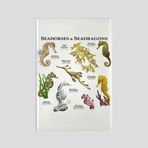 Seahorses & Seadragons Rectangle Magnet