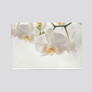 Orchids Reflection Magnets