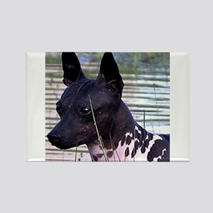 american hairless terrier Magnets