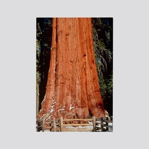 Base of Giant Sequoia 'General Sh Rectangle Magnet