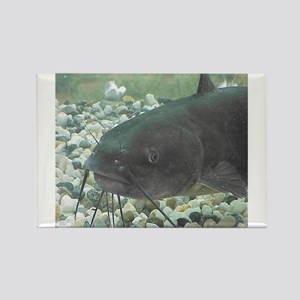 Catfish Magnets