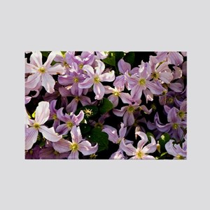 Clematis 'Prince Charles' - Rectangle Magnet