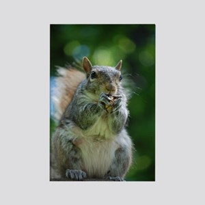 Friendly Squirrel Rectangle Magnet