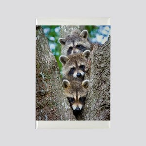 Baby Raccoon Trio Rectangle Magnet