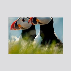 Puffin Pair 14x14 600 dpi Rectangle Magnet