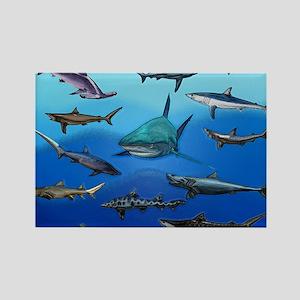 Shark Gathering Magnets