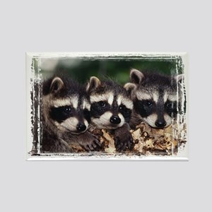 3 Raccoons Rectangle Magnet