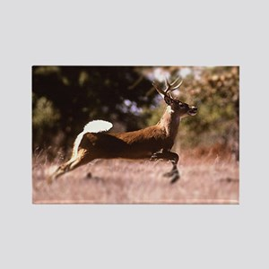 White-Tail Deer Running  Rectangle Magnet