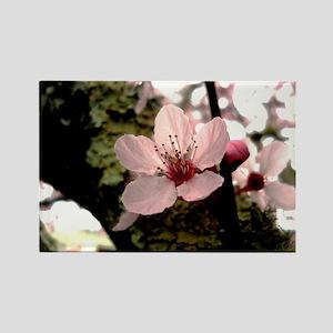 Cherry Blossom, 1 Rectangle Magnet