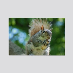Hungry Little Squirrel Rectangle Magnet