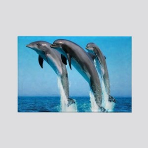 3 Dolphins Rectangle Magnet