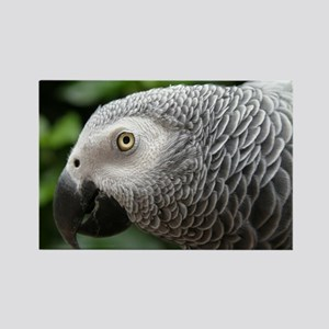African Grey Parrot Rectangle Magnet