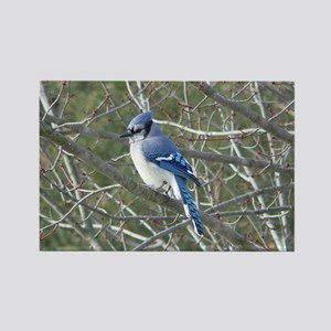Bluejay Rectangle Magnet