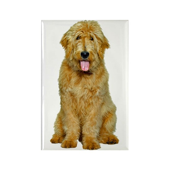 Goldendoodle Photo