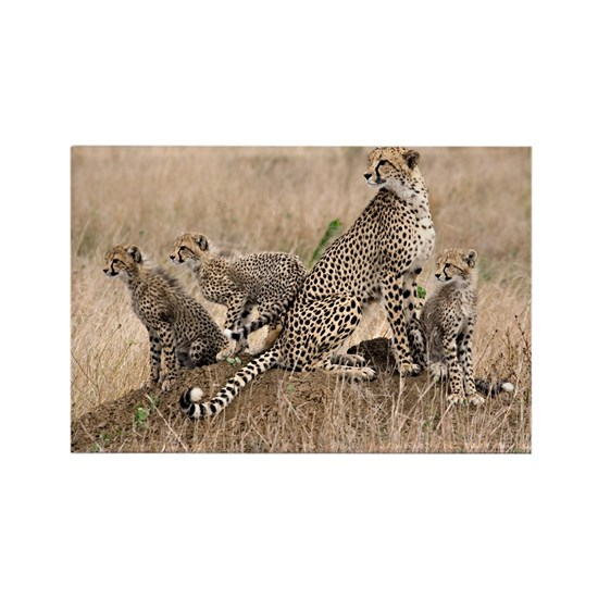 Cheetah and cubs5 -large