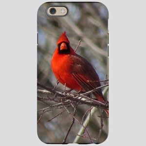 Male Cardinal iPhone 6 Tough Case