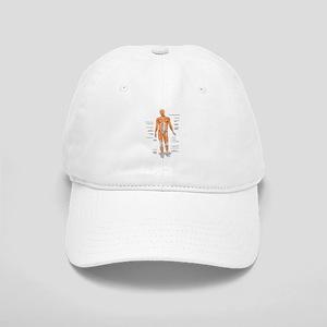 Muscles anatomy body Baseball Cap