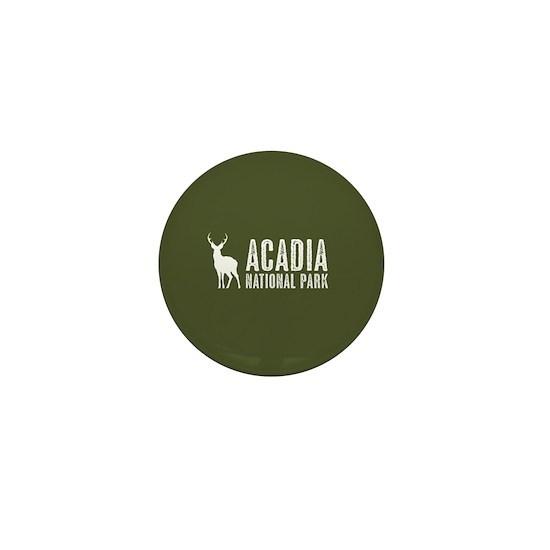 Deer: Acadia National Park, Maine