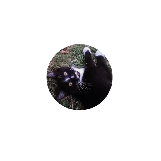 Gomez Tuxedo Cat